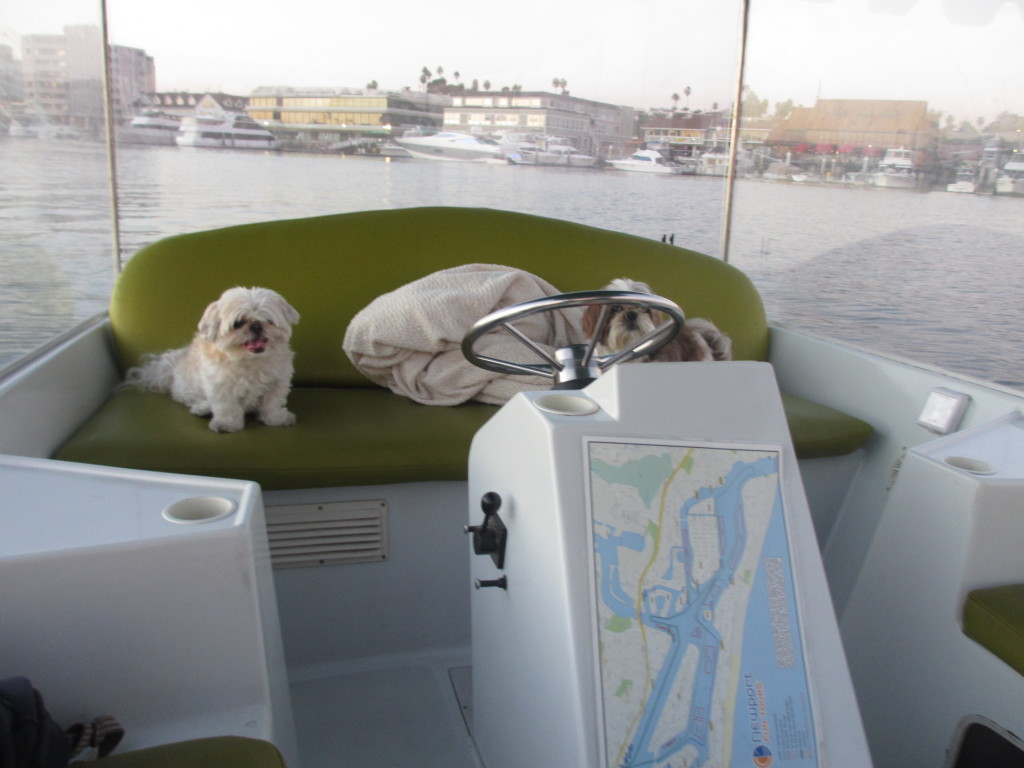 dogs on a duffy boat