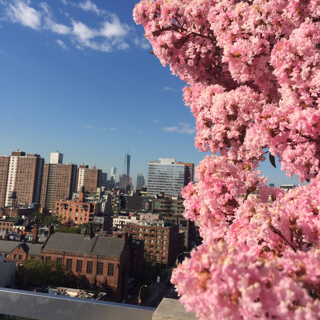 view of freedom tower and pink cherry blossom tree Caitlin Hartley of Styled American