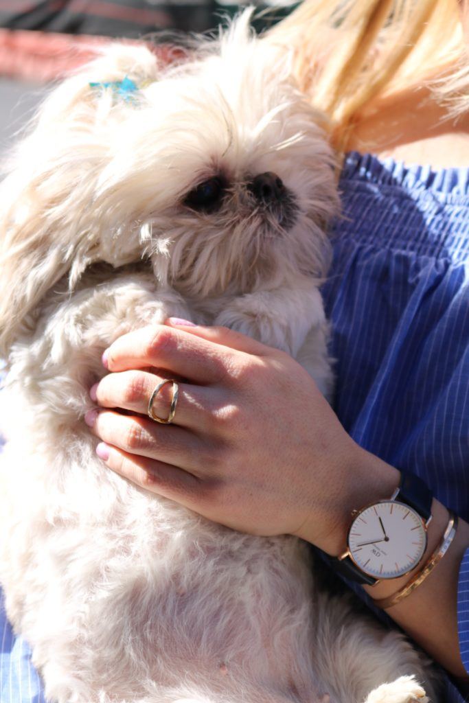 shih-tzu-in-owners-arms http://styledamerican.com/ellies-story/