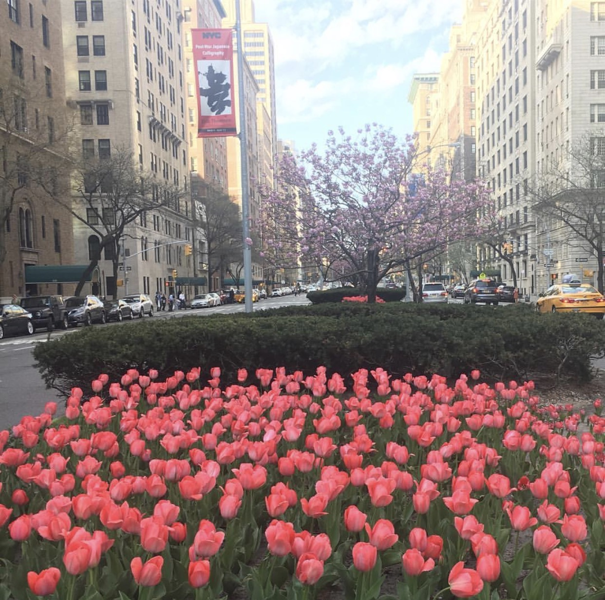 pink tulips on Park Avenue in NYC